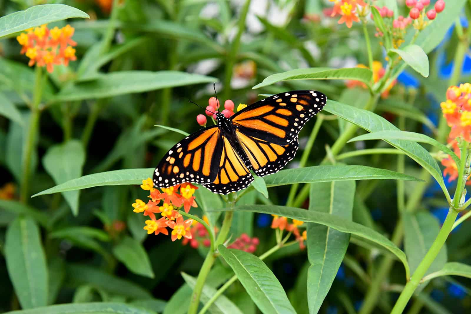 Discount coupons for butterfly conservatory cambridge