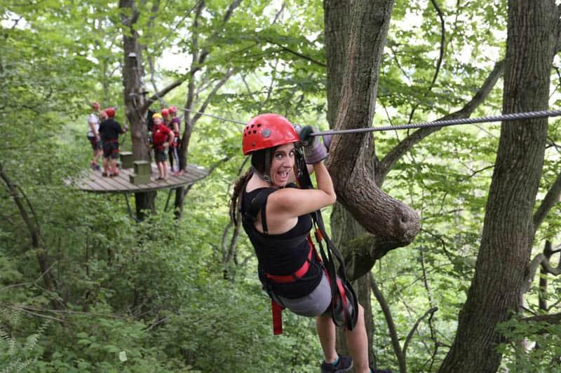 Treetop Blog
